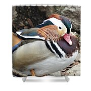 Male Wood-duck Shower Curtain