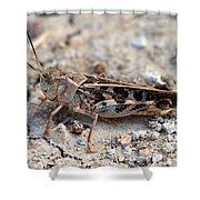 Male Wrinkled Grasshopper Shower Curtain