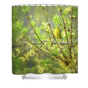 Male Yellow Warbler Shower Curtain