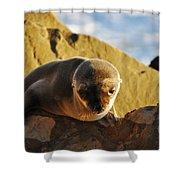 Malibu California Baby Sea Lion Shower Curtain
