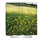 Malibu Creek Wildflowers Shower Curtain