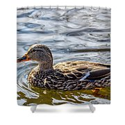 Mallard 2 Shower Curtain