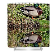 Mallard And Reflection Shower Curtain