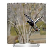 Mallard Approach Shower Curtain