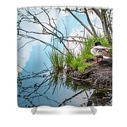 Mallard At Silver Lake Shower Curtain