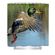 Mallard Digital Freehand Painting 3 Shower Curtain