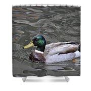 Mallard Drake Duck Shower Curtain