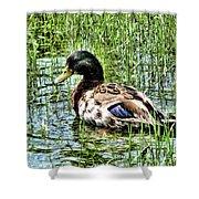 Mallard Duck 1 Shower Curtain