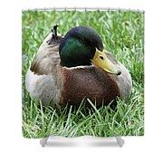 Mallard Duck #2 Shower Curtain
