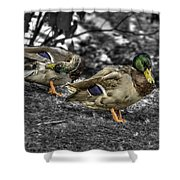 Mallard Duck A4 Shower Curtain