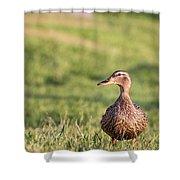 Mallard Duck Anas Platyrhynchos, Female Shower Curtain