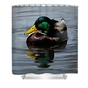 Mallard Duck Drake I Shower Curtain