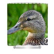 Mallard Duck Female Shower Curtain