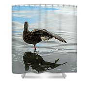 Mallard Duck Hen Stretching Wing Shower Curtain
