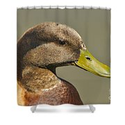Mallard Duck Variety IIi Shower Curtain