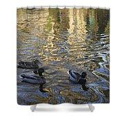 Mallard Ducks On The Canal #1107 Shower Curtain
