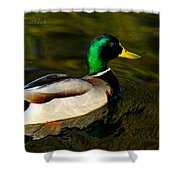Mallard Green Shower Curtain