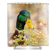 Drake In The Flowers Shower Curtain