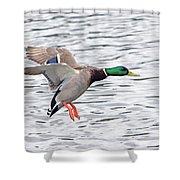 Mallard Landing II Shower Curtain