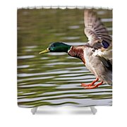 Mallard Landing Shower Curtain