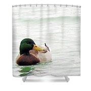 Mallard Shower Curtain