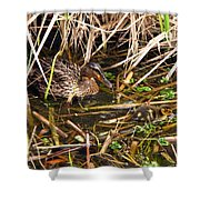 Mallard Mama With Duckling Shower Curtain