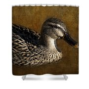 Mallard Matriarch Shower Curtain