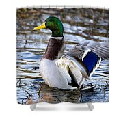 Mallard Moment Shower Curtain