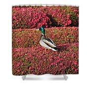 Mallard On A Floral Carpet Shower Curtain