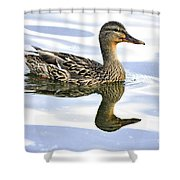 Mallard Reflections Shower Curtain