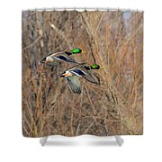 Mallard's In Flight Shower Curtain