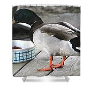 Mallards Like Cat Food Shower Curtain