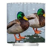 Mallards On Ice Shower Curtain