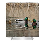 Mallards On The Pond Shower Curtain