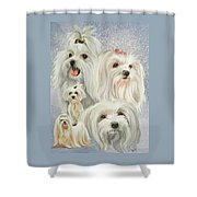 Maltese Collage Shower Curtain