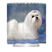 Maltese Dog Shower Curtain by Corey Ford
