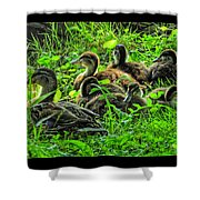 Mama And Babies Shower Curtain