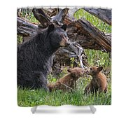 Mama Black Bear With Cinnamon Cubs Shower Curtain
