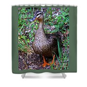 Mama Duck Shower Curtain