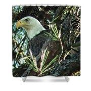 Mama Eagle  Shower Curtain