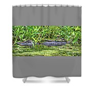 Mama Gator With Babies Shower Curtain