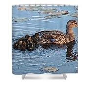 Mama Mallard And Her Ducklings Shower Curtain