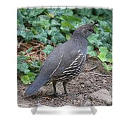 Mama Quail Profile With Ivy Shower Curtain