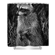 Mama Raccoon Shower Curtain