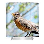 Mama Robin 1 Shower Curtain
