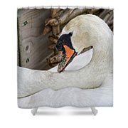 Mama Swan At Abbotsbury Shower Curtain