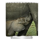 Mama's Milk Bar Shower Curtain