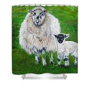 Mamma And Baby Sheep Of Ireland Shower Curtain