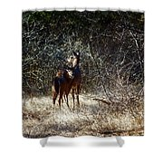 Mamma's Apron Strings Color Shower Curtain