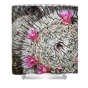 Mammillaria Cactus With Small Flowers Shower Curtain